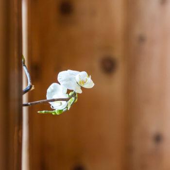 Der Orchidee passts in der Bauernstube